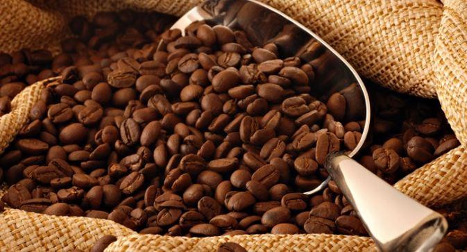 cafe-kopi-luwak-ruta-del-cafe-mcbo